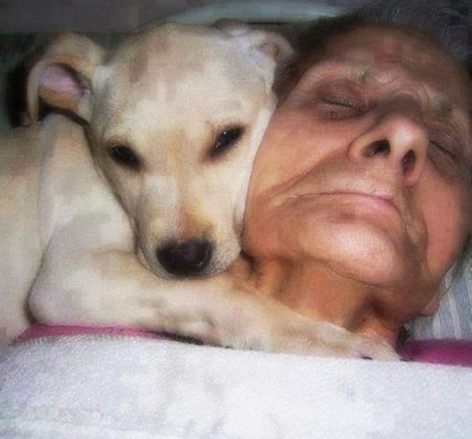 Хозяйка лежала в коме, а собака не отходила от нее ни на минуту... Когда женщина очнулась, её первые слова потрясли всех! рис 2