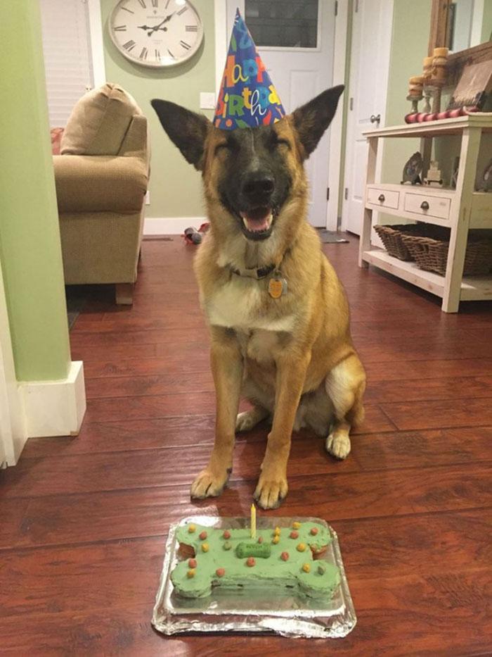 15-happy-dogs