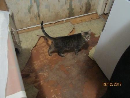 Калуга: квартиранты этой квартиры - 38 котов! Все они заперты в одной комнате, волонтёры в отчаянии... рис 5