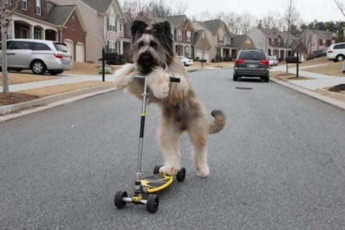 Норман - самый талантливый пес в мире! Но его яркая жизнь недавно омрачилась, и он нуждается в помощи... рис 2