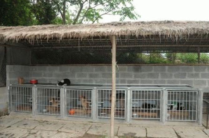 Эта пара не ждёт благодарности... Она просто спасает неприкаянных собак в Непале!