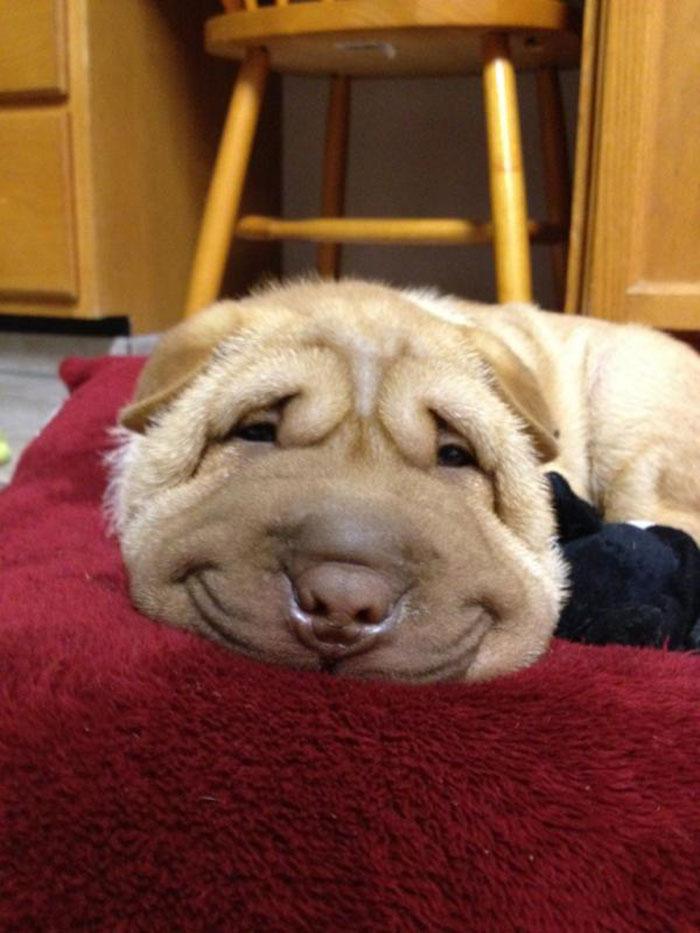20-happy-dogs