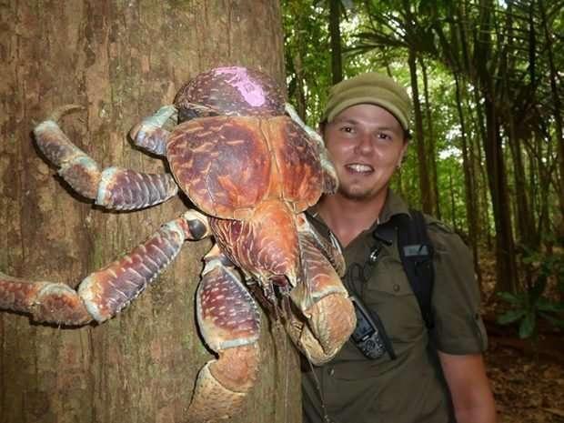 Мировые гиганты! Топ-11 самых огромных животных, рядом с которыми страшно находиться! рис 2