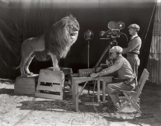 Их выращивали для голливудских фильмов! Редчайшие фото львиной фермы прошлого века рис 6