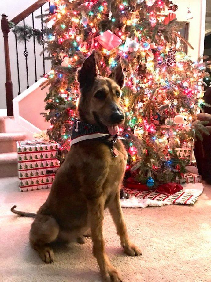 Норман - самый талантливый пес в мире! Но его яркая жизнь недавно омрачилась, и он нуждается в помощи... рис 3