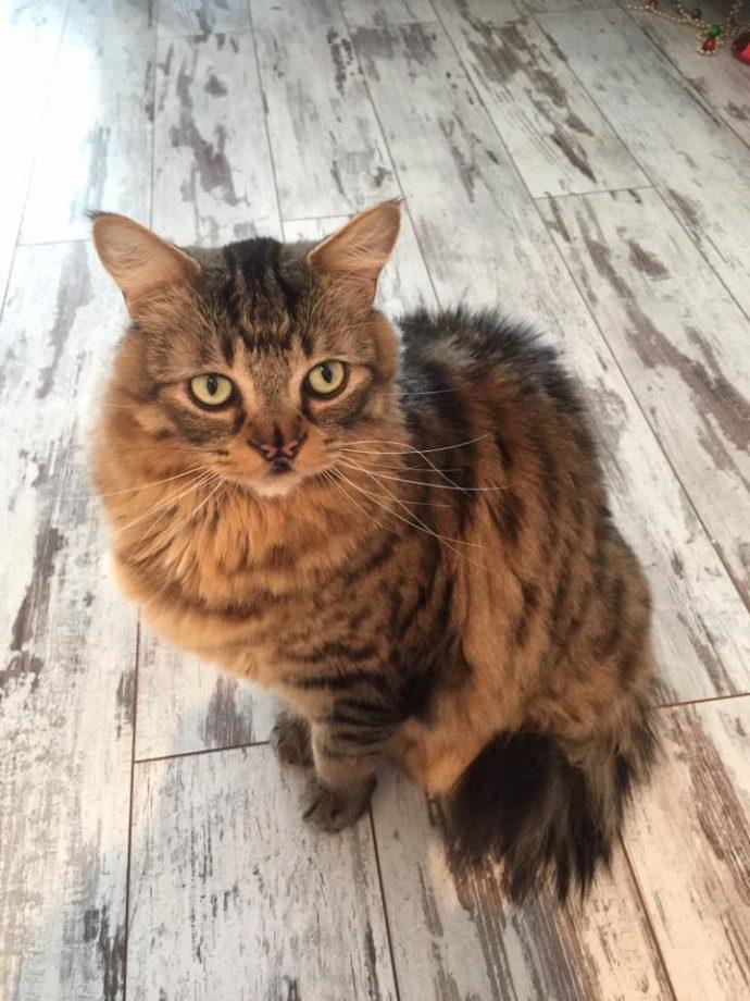 Это - особенный кот с носом в виде БАБОЧКИ. Но не любить же его из-за этого меньше? рис 14