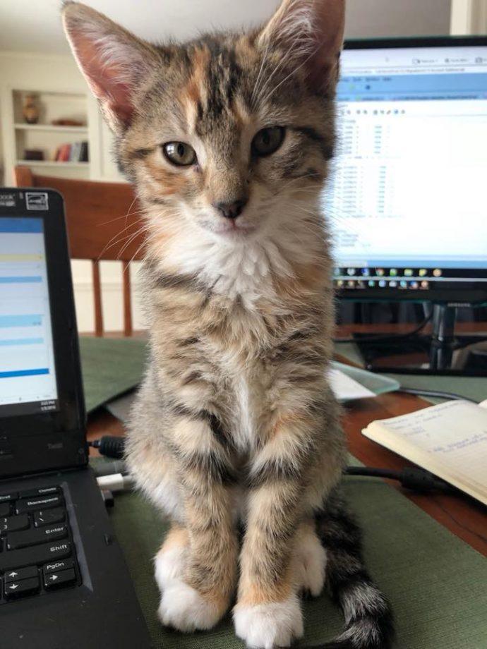 """Взяла - и понесла! Женщине """"очень захотелось"""" котёнка, поэтому она украла его прямо из волонтёрского центра! рис 2"""