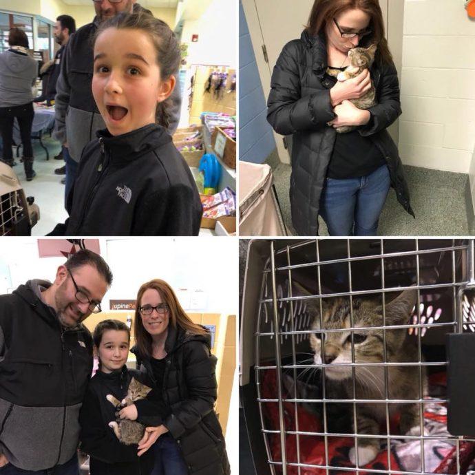 """Взяла - и понесла! Женщине """"очень захотелось"""" котёнка, поэтому она украла его прямо из волонтёрского центра! рис 8"""