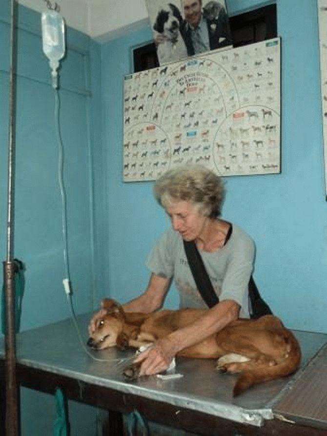 Эта пара не ждёт благодарности... Она просто спасает неприкаянных собак в Непале! рис 2