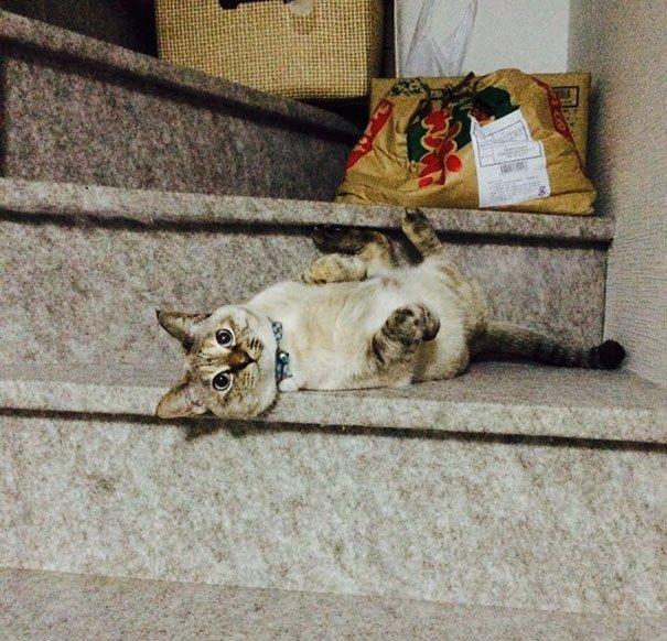 3-noname-cat.jpg