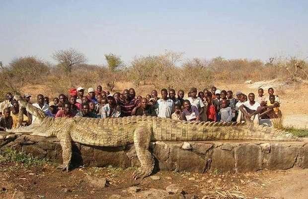 Мировые гиганты! Топ-11 самых огромных животных, рядом с которыми страшно находиться! рис 5