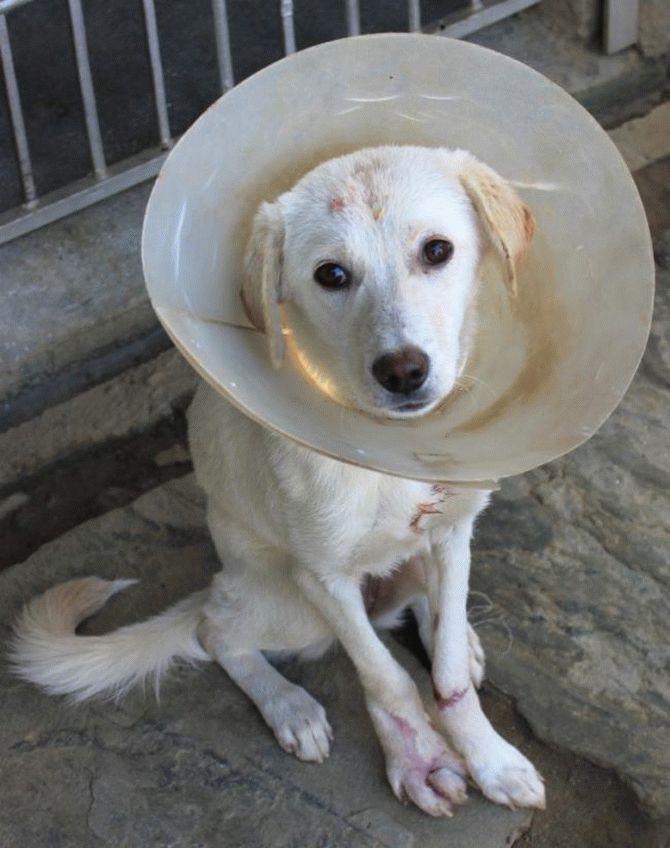 Эта пара не ждёт благодарности... Она просто спасает неприкаянных собак в Непале! рис 3