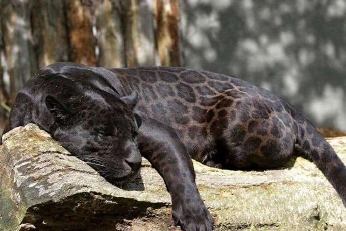 15 самых восхитительных животных, которых природа создавала в хорошем настроении :) рис 5