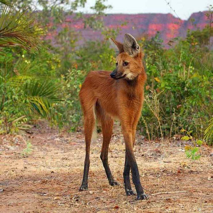 15 самых восхитительных животных, которых природа создавала в хорошем настроении :) рис 10