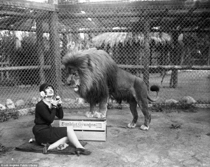 Их выращивали для голливудских фильмов! Редчайшие фото львиной фермы прошлого века рис 4