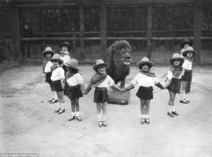 Их выращивали для голливудских фильмов! Редчайшие фото львиной фермы прошлого века рис 2