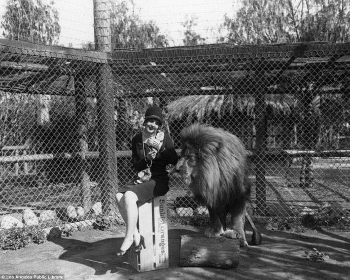 Их выращивали для голливудских фильмов! Редчайшие фото львиной фермы прошлого века