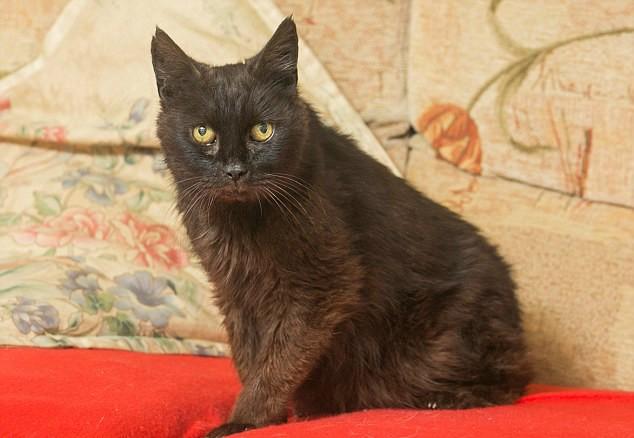 Он шёл домой 15 лет! Путь чёрного кота, которому всё-таки однажды повезло... рис 2