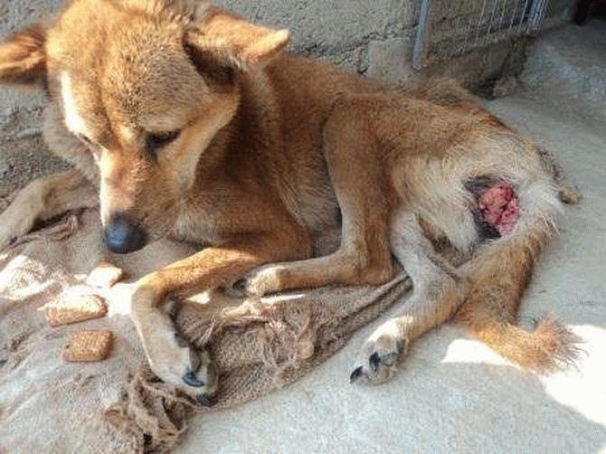 Эта пара не ждёт благодарности... Она просто спасает неприкаянных собак в Непале! рис 4