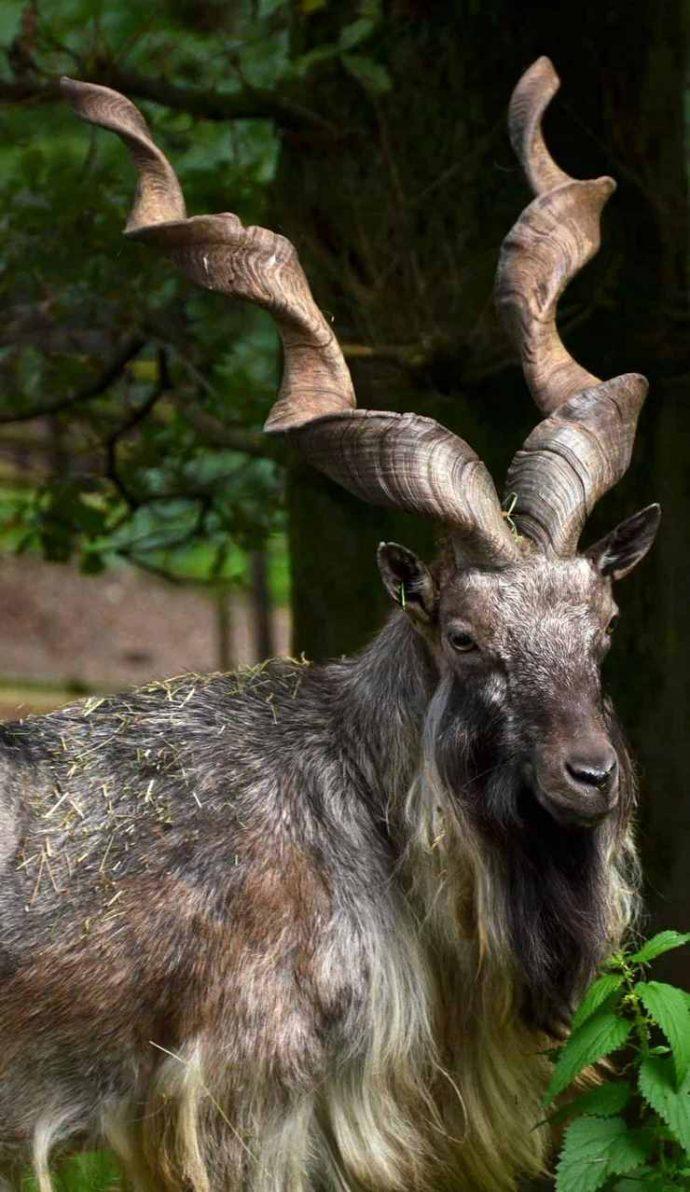 15 самых восхитительных животных, которых природа создавала в хорошем настроении :) рис 11