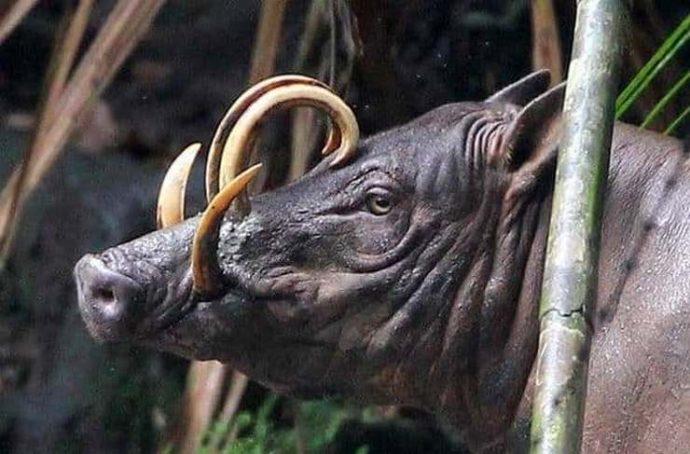 15 самых восхитительных животных, которых природа создавала в хорошем настроении :) рис 12