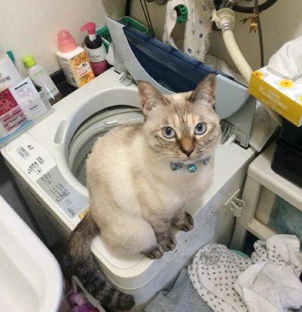 5-noname-cat.jpg