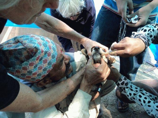 Эта пара не ждёт благодарности... Она просто спасает неприкаянных собак в Непале! рис 5