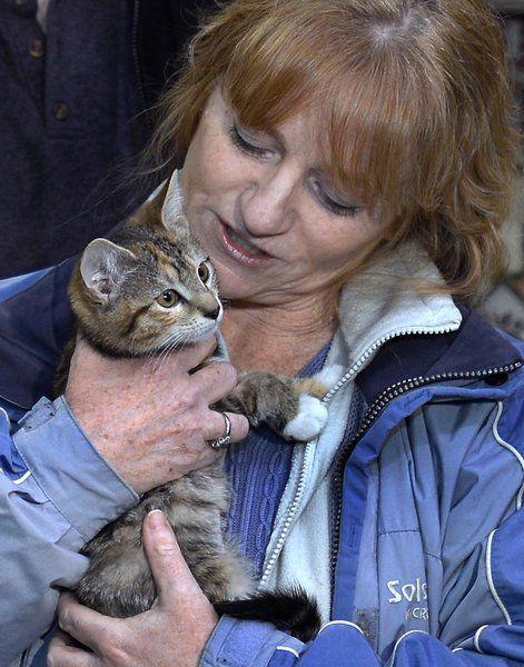 """Взяла - и понесла! Женщине """"очень захотелось"""" котёнка, поэтому она украла его прямо из волонтёрского центра! рис 5"""