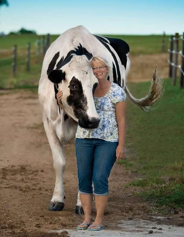 Мировые гиганты! Топ-11 самых огромных животных, рядом с которыми страшно находиться! рис 7