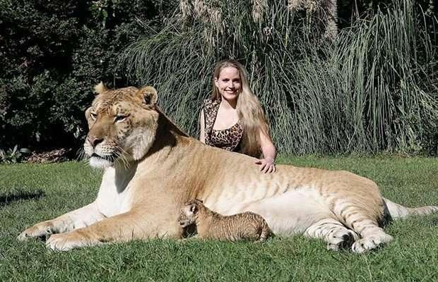 Мировые гиганты! Топ-11 самых огромных животных, рядом с которыми страшно находиться! рис 9