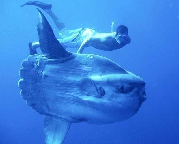 Мировые гиганты! Топ-11 самых огромных животных, рядом с которыми страшно находиться! рис 10