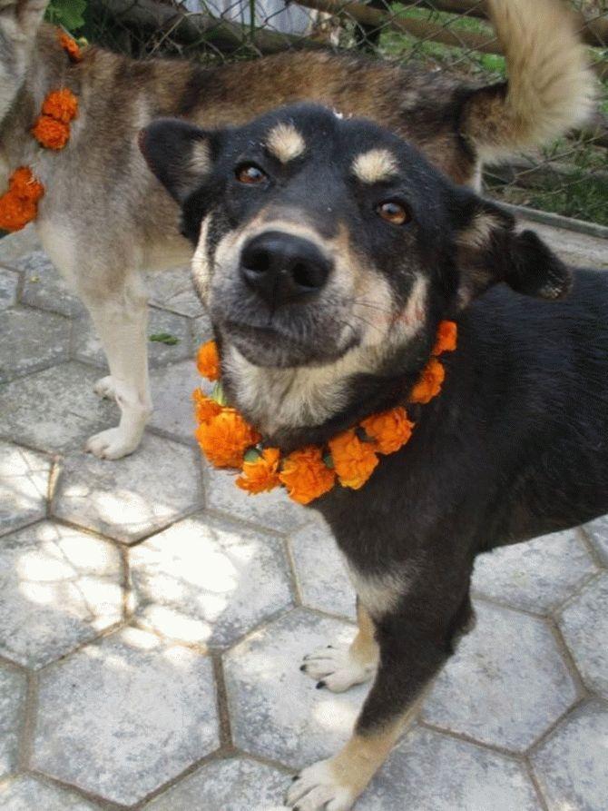 Эта пара не ждёт благодарности... Она просто спасает неприкаянных собак в Непале! рис 8