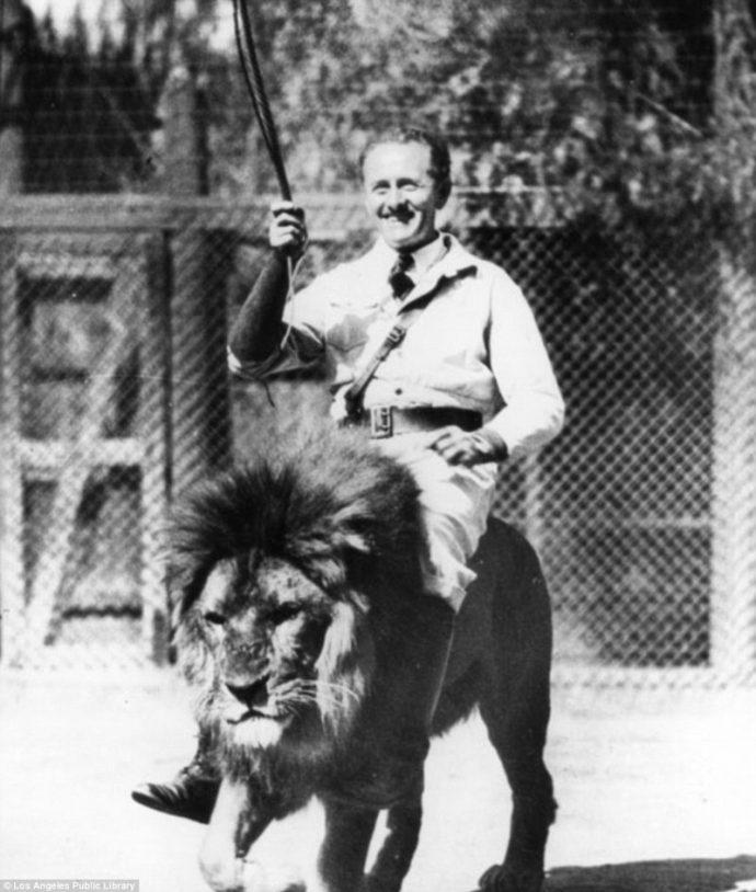 Их выращивали для голливудских фильмов! Редчайшие фото львиной фермы прошлого века рис 7