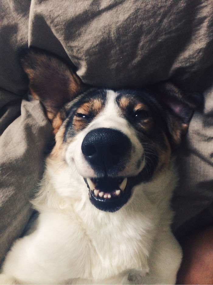 9-happy-dogs