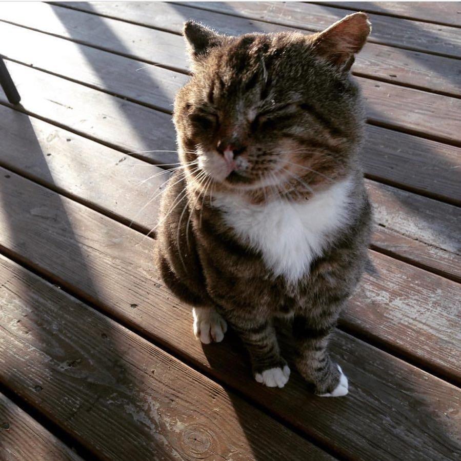 Что делает этот вальяжный кот? Не жизнь, а малина у товарища! А ведь раньше...