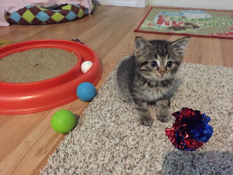 Никто не знал, сколько ему осталось! Седьмой, самый маленький, котёнок падал на пол при каждом шаге, но теперь...