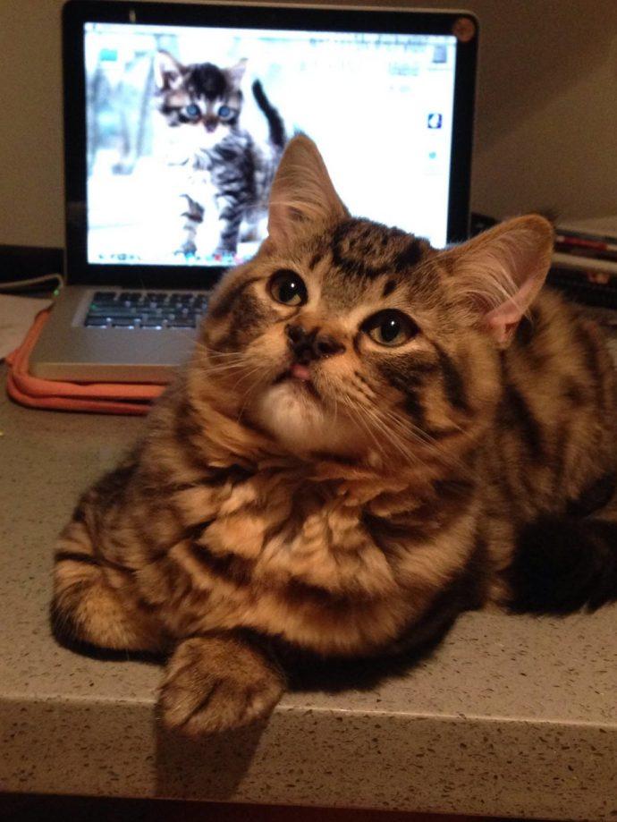 Это - особенный кот с носом в виде БАБОЧКИ. Но не любить же его из-за этого меньше? рис 9