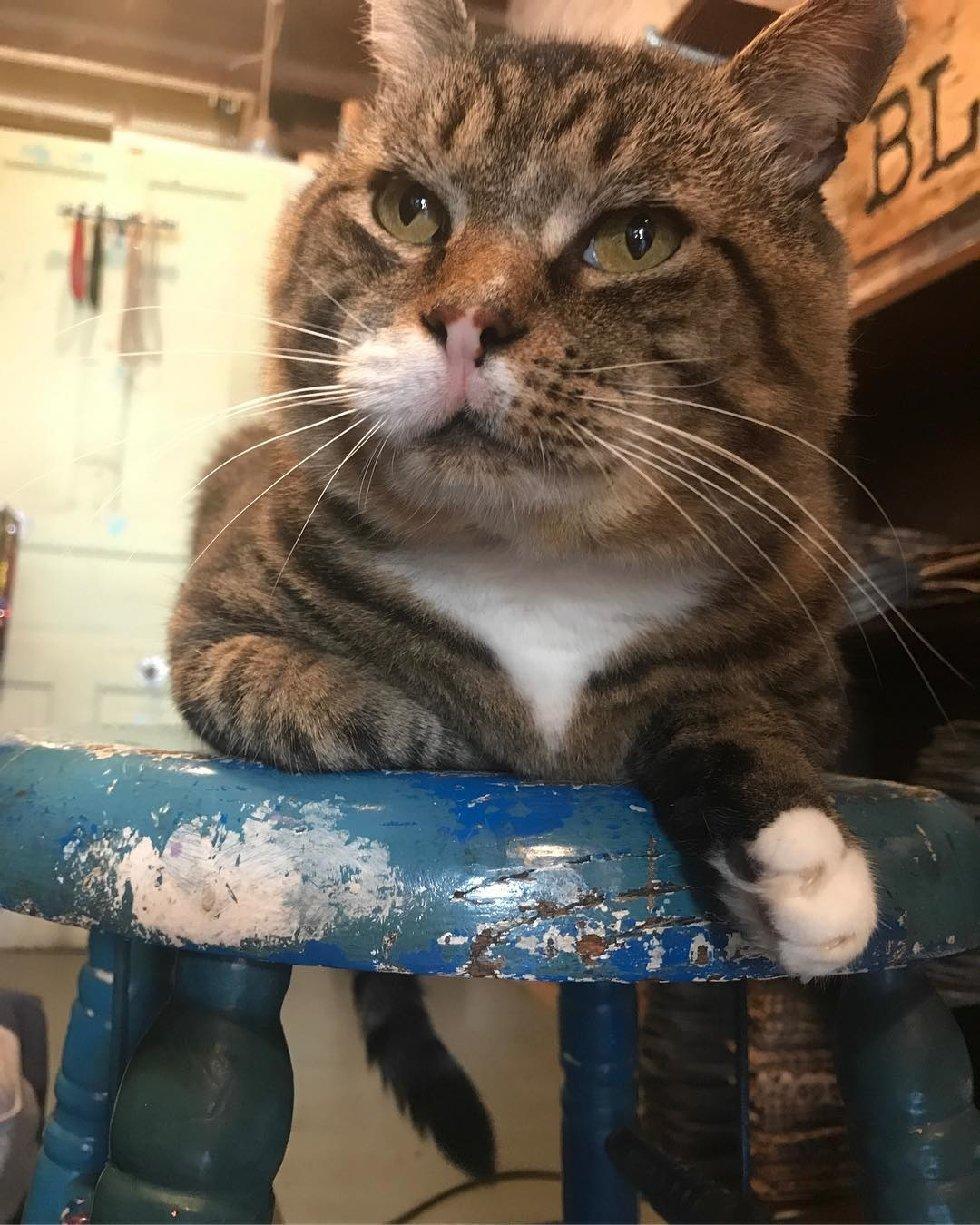 Что делает этот вальяжный кот? Не жизнь, а малина у товарища! А ведь раньше... рис 10