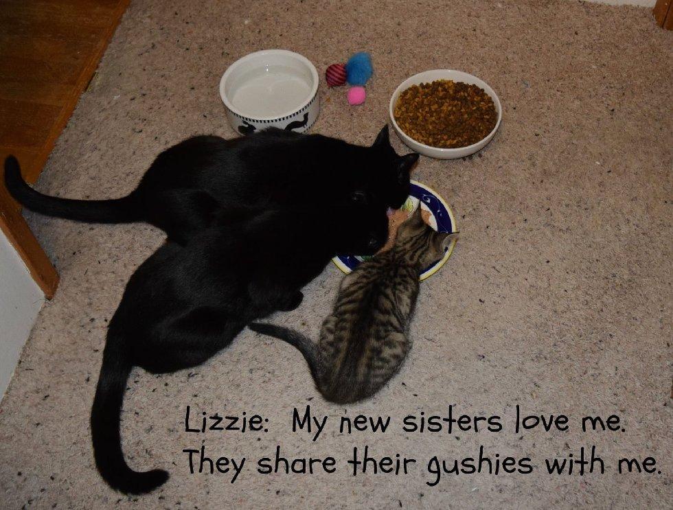 Эта кошка удивила всех! О таких странных сюрпризах беременности вы ещё не слышали...) рис 12