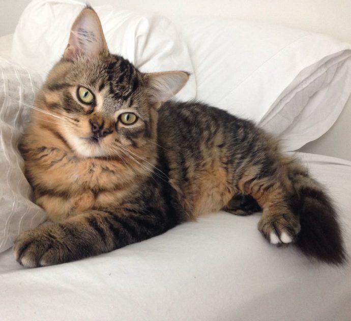 Это - особенный кот с носом в виде БАБОЧКИ. Но не любить же его из-за этого меньше? рис 10