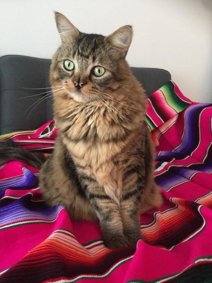 Это - особенный кот с носом в виде БАБОЧКИ. Но не любить же его из-за этого меньше? рис 12