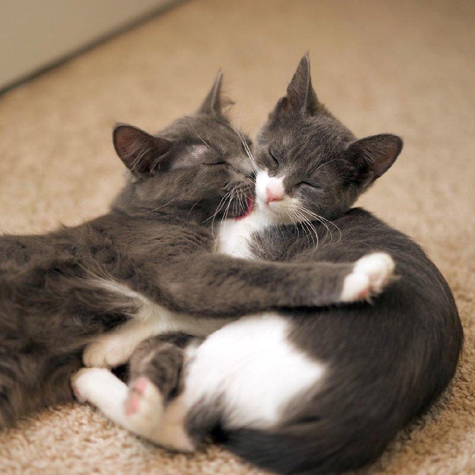 """""""Мы спасаем самых слабых..."""" У этих красивейших кошек - одно сердце на двоих! рис 13"""