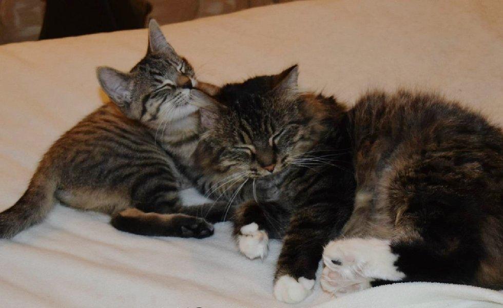 Эта кошка удивила всех! О таких странных сюрпризах беременности вы ещё не слышали...) рис 11