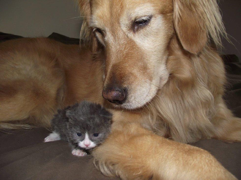 """Маленький кот по прозвищу """"Мышонок"""" родился совсем не обычным... И вот в кого он вырос сейчас! рис 3"""