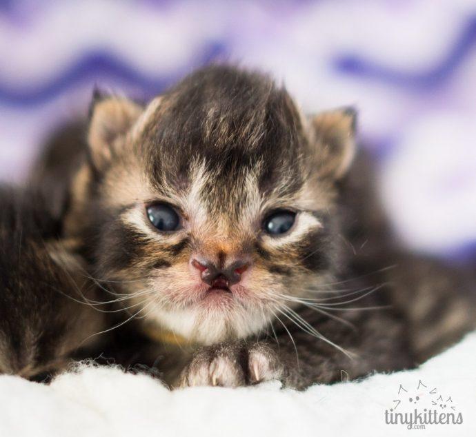 Это - особенный кот с носом в виде БАБОЧКИ. Но не любить же его из-за этого меньше? рис 2