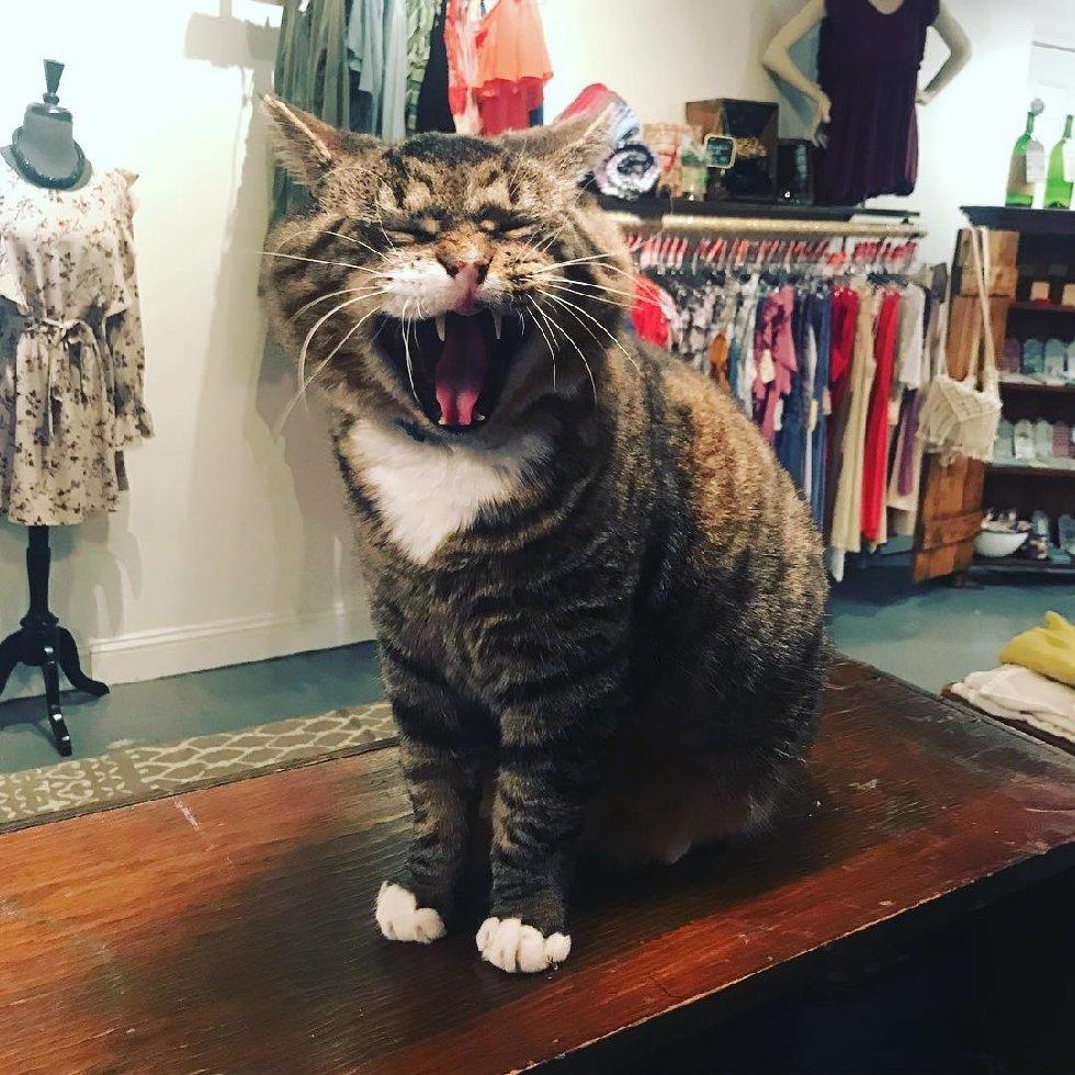 Что делает этот вальяжный кот? Не жизнь, а малина у товарища! А ведь раньше... рис 3