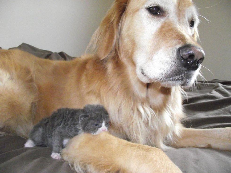 """Маленький кот по прозвищу """"Мышонок"""" родился совсем не обычным... И вот в кого он вырос сейчас! рис 2"""