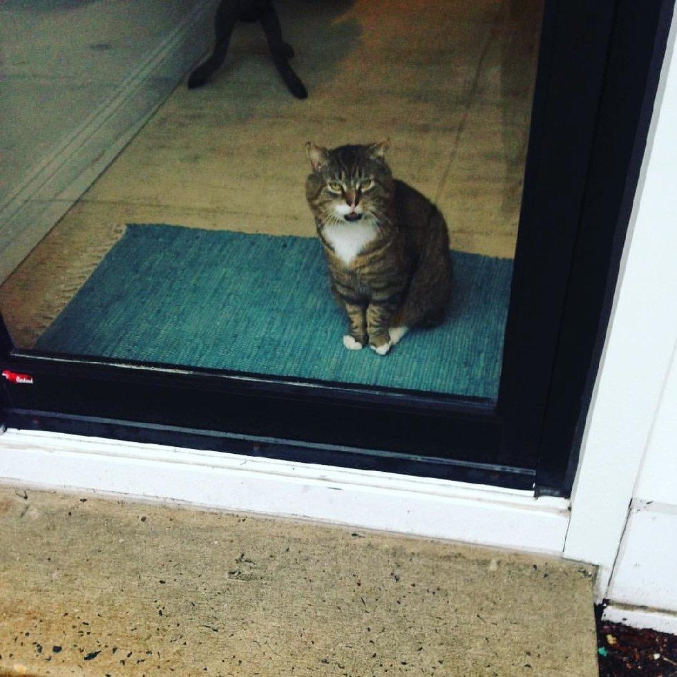 Что делает этот вальяжный кот? Не жизнь, а малина у товарища! А ведь раньше... рис 4