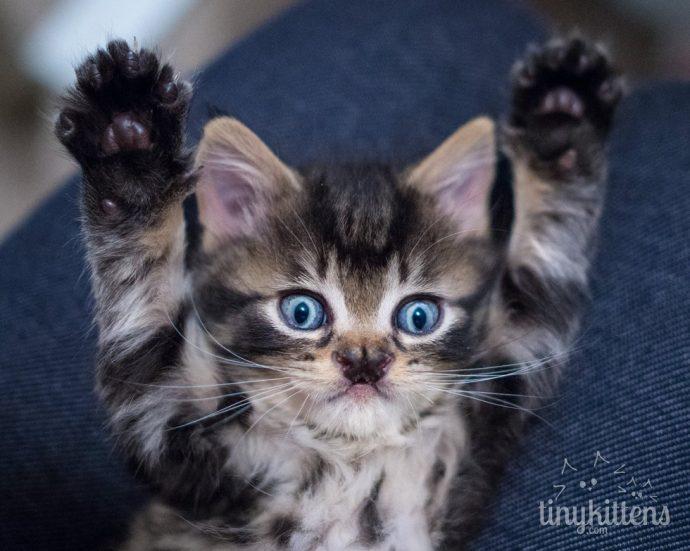 Это - особенный кот с носом в виде БАБОЧКИ. Но не любить же его из-за этого меньше? рис 3