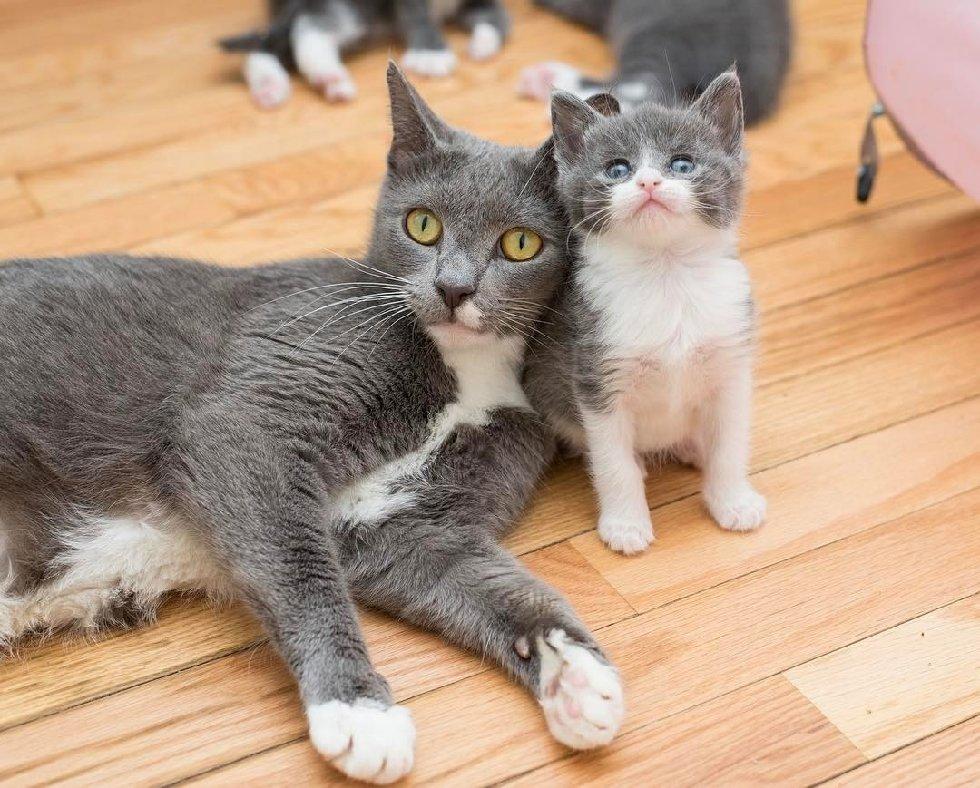 """""""Мы спасаем самых слабых..."""" У этих красивейших кошек - одно сердце на двоих! рис 6"""